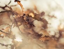 Autumn Heath